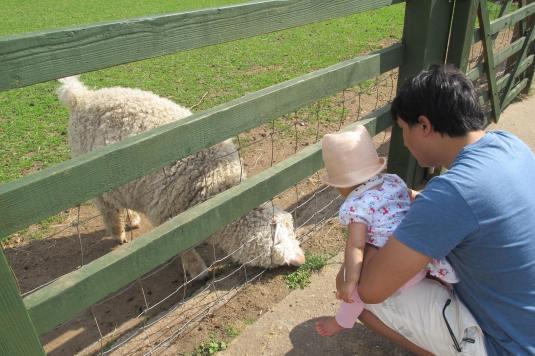 Baa baa sheep