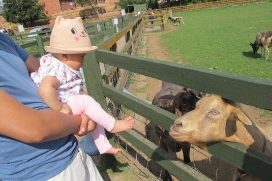 Freya and the goats